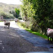Irland – Kurioses auf dem Weg