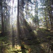 Waldviertel Wochenende im Frühling