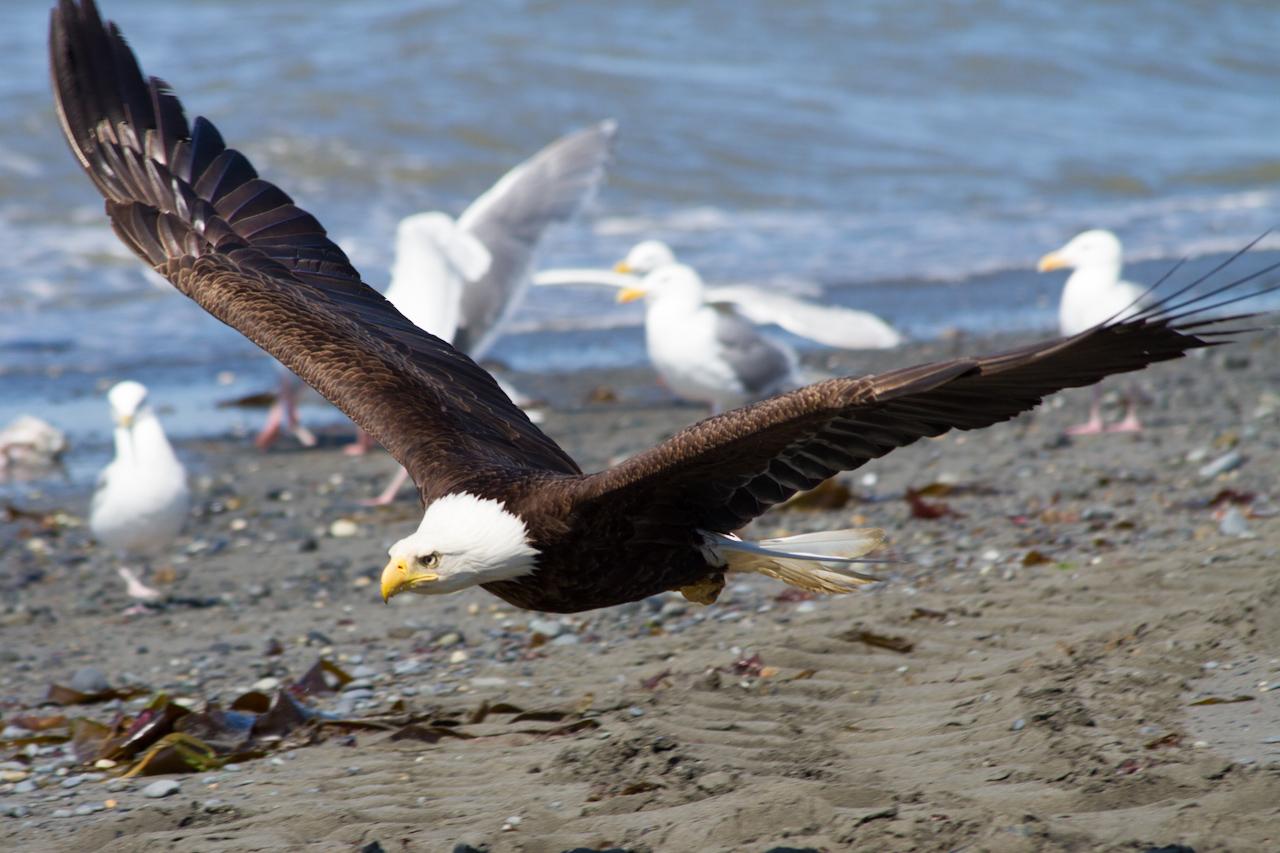Alaska Tag 12 | Seward – Homer