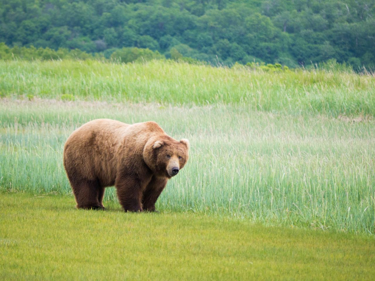 Alaska Tag 13 | Homer