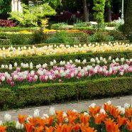 Madrid | Real Jardín Botánico